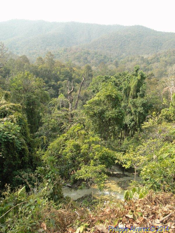 http://www.palmiers.eu/FDP/17-bua-tong/Bua-Tong_02.jpg