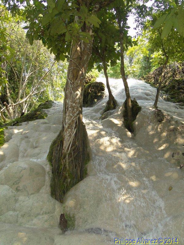 http://www.palmiers.eu/FDP/17-bua-tong/Bua-Tong_33.jpg