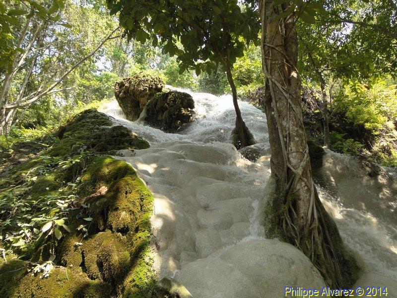 http://www.palmiers.eu/FDP/17-bua-tong/Bua-Tong_43.jpg